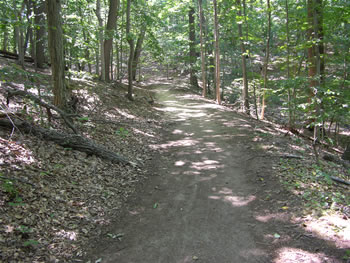 A section of the Tatum Ramble trail