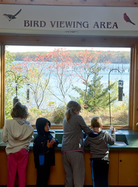 Bird Viewing Area